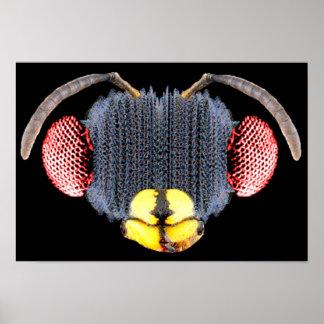 Insecto de la bóveda póster