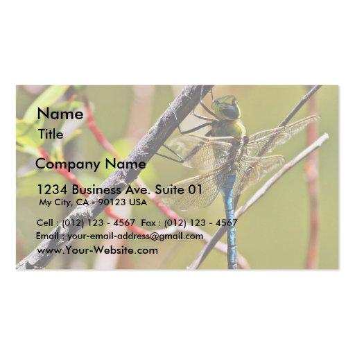 Insecto de la libélula tarjetas de visita