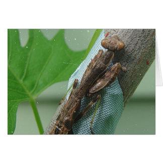 Insecto de la mantis religiosa tarjeta de felicitación