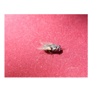 Insecto de la mosca de soplo en rojo