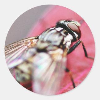 Insecto de la mosca pegatina redonda