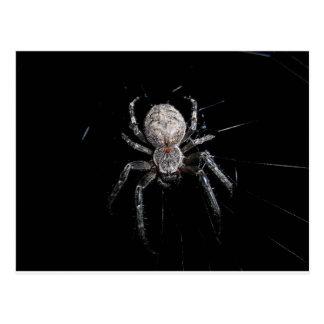 insecto de la red de la telaraña de la araña de la postales