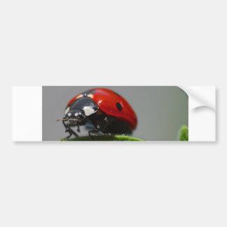 insecto de la señora pegatina para auto