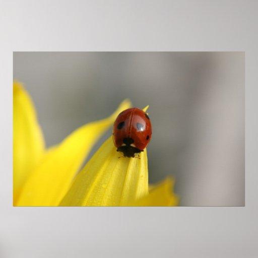 insecto de la señora en la flor del sol en lona posters
