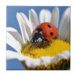 Insecto de la señora en margarita azulejos