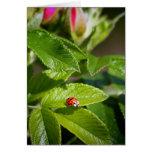 Insecto de la señora en una tarjeta de felicitació