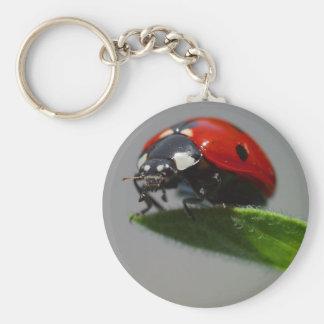 insecto de la señora llavero redondo tipo pin