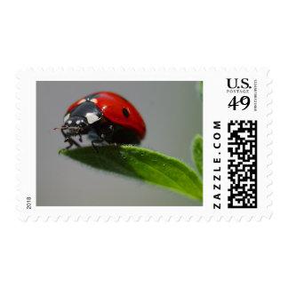 insecto de la señora sello postal