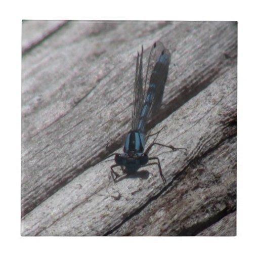 Insecto de las arañas de los arácnidos de los inse azulejo cuadrado pequeño