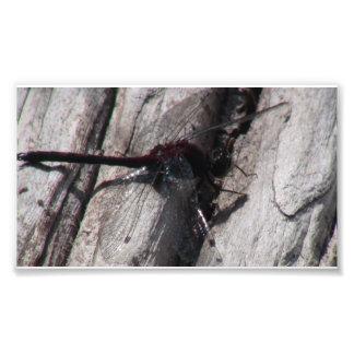 Insecto de las arañas de los arácnidos de los inse fotografia