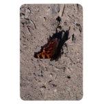 Insecto de las arañas de los arácnidos de los inse iman de vinilo
