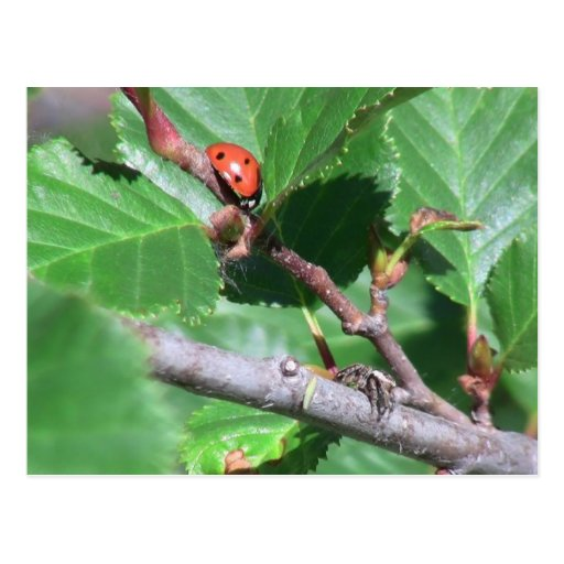 Insecto de las arañas de los arácnidos de los inse tarjeta postal