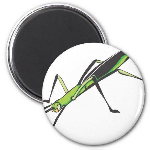 Insecto de palillo serio imanes