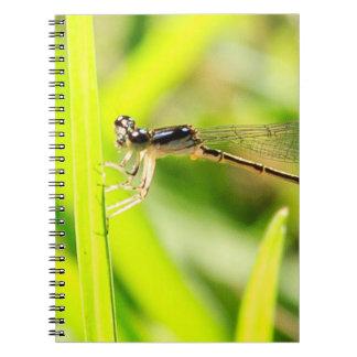 Insecto de plata notebook