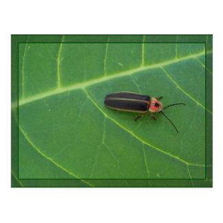 Insecto de relámpago en la hoja postal