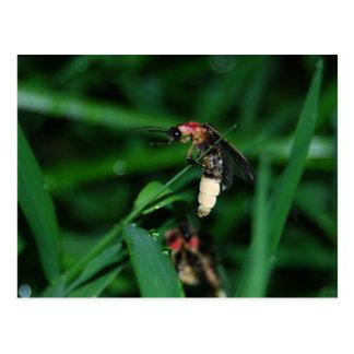 Insecto de relámpago lluvioso de la noche tarjetas postales