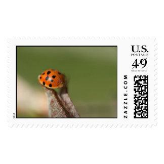 insecto de reserva sello