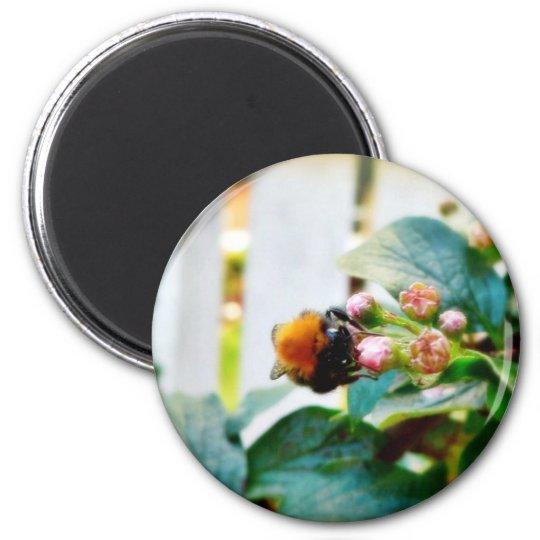 Insecto del abejorro imán redondo 5 cm