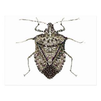 insecto del hedor postales