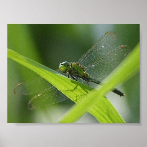 Insecto del pantano posters
