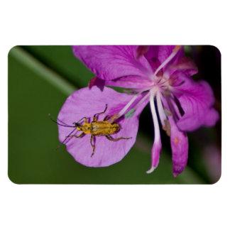 Insecto en Fireweed; Ningún texto Imanes De Vinilo