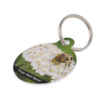 Insecto en una macro de la flor blanca placa de mascota