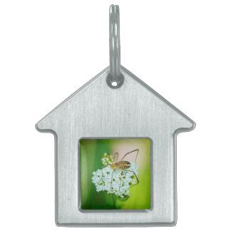Insecto en una macro de la flor blanca placa mascota