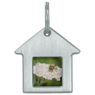 Insecto en una macro de la flor blanca placa de nombre de mascota