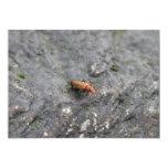 Insecto en una roca comunicado