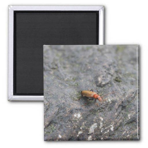 Insecto en una roca imán de frigorifico