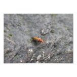 Insecto en una roca invitación