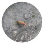 Insecto en una roca plato