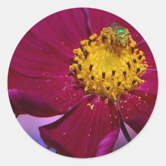 Insecto extraño de Grren en una flor en parque del Pegatina Redonda