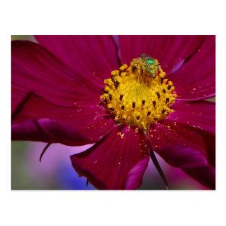 Insecto extraño de Grren en una flor en parque del Postales