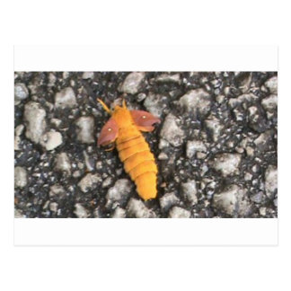 Insecto extraño postal