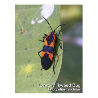 Insecto grande del Milkweed Postal