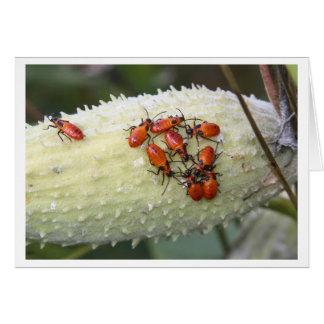 Insecto grande del Milkweed Tarjeta De Felicitación