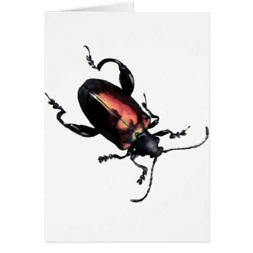 Insecto negro y rojo del escarabajo tarjeton