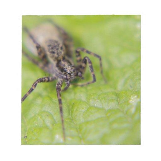 Insecto observado blocs