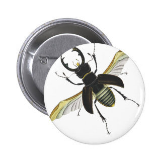 Insecto Pins