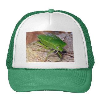 Insecto vegetal verde gorras de camionero