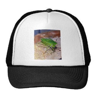 Insecto vegetal verde gorro