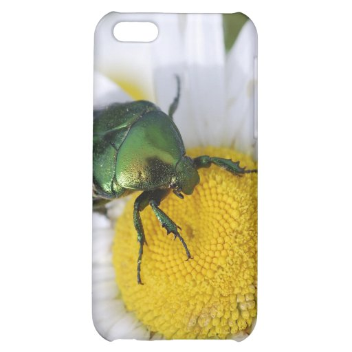 Insecto verde