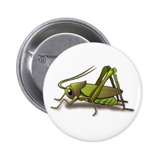 Insecto verde del grillo pin