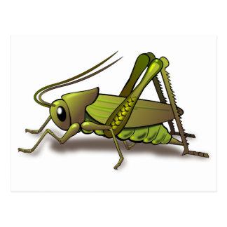 Insecto verde del grillo tarjetas postales