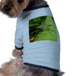 Insecto verde ropa para mascota