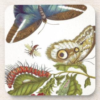 Insectorum Surinamensium de la metamorfosis Posavasos