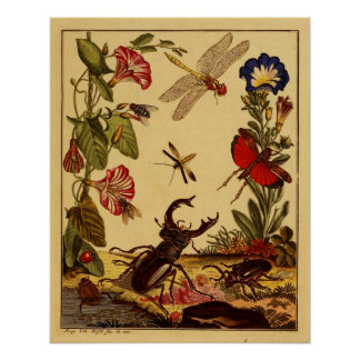 Insectos 1764 poster