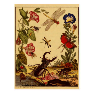 Insectos 1764 postal