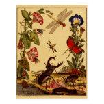 Insectos 1764 tarjeta postal
